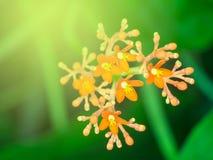 Buisson rouge de fleur dans le jardin d'été Image libre de droits