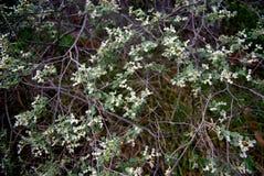 Buisson vert Photos libres de droits