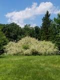 Buisson vert images libres de droits