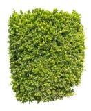 Buisson vert d'isolement Images libres de droits