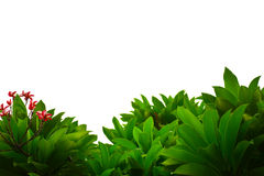 Buisson vert frais Photo stock
