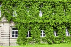 Buisson vert sur une construction Photographie stock libre de droits