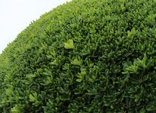 buisson vert, usine Photos stock