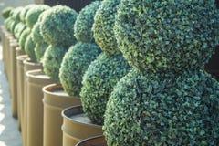 buissons Images libres de droits