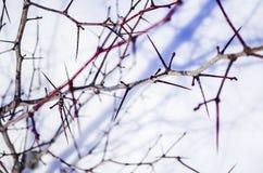 buissons Image libre de droits