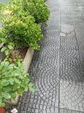 buissons Photo libre de droits