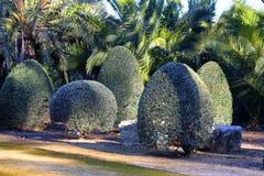 Buissons admirablement coupés Images libres de droits