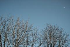Buissons avec la lune sur le fond Photographie stock libre de droits