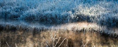 Buissons bleus frais d'herbe L'aube de matin sur la glace et le gel a couvert le feuillage de marécage Photo libre de droits