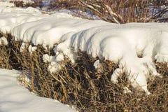 Buissons couverts de neige en Sibérie Photo stock