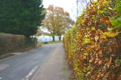 Buissons d'automne Photos libres de droits