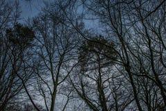 Buissons d'isolement d'arbre Photographie stock libre de droits