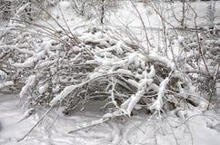 Buissons dans la neige Photo stock