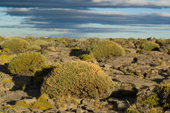 Buissons dans la steppe patagonian Images stock