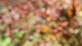 Buissons de berbéris clips vidéos