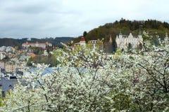 Buissons de floraison de cerise Photographie stock libre de droits
