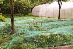 Buissons de fraise couverts de réseau Image libre de droits