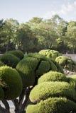 Buissons de jardin équilibrés par bien Photos stock