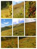 Buissons de myrtille Photographie stock