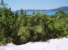 Buissons en dunes Photo libre de droits