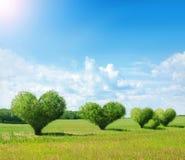 Buissons en forme de coeur Image stock