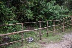 Buissons en parc national d'Eravikulam image stock