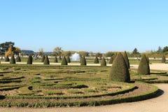 Buissons en parc régulier photo libre de droits