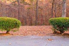Buissons et arbres de parc derrière lui Images libres de droits