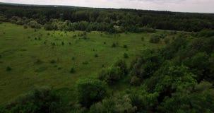 Buissons et fileds dans la vue aérienne d'été banque de vidéos