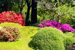 Buissons fleurissants colorés Photo stock