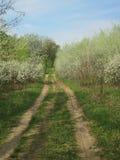 Buissons fleurissants de ressort dans la forêt Photo stock
