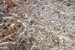 Buissons glacés - 3 Images libres de droits