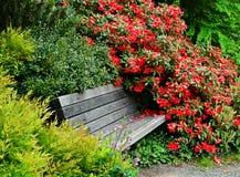 Buissons japonais de fleur de banc de jardin Photographie stock