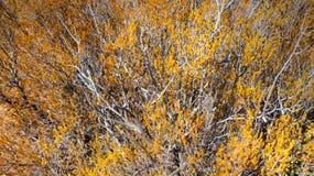 Buissons jaunes image libre de droits