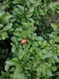 buissons lames de vert images libres de droits