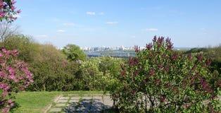 Buissons lilas au printemps dans le jardin botanique de Kiev Image stock