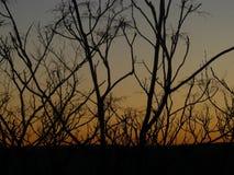 Buissons pendant le coucher du soleil Images libres de droits