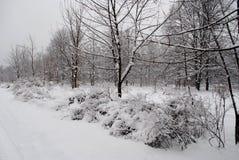 Buissons sous des dérives de neige Image libre de droits