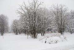 Buissons sous la neige Photographie stock libre de droits