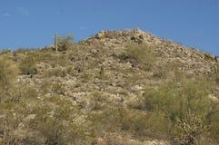 Buissons sur la montagne rocheuse Images stock