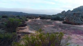 Buissons sur une terre rocheuse 4k banque de vidéos