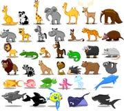Buitengewoon brede reeks dieren met inbegrip van leeuw, kangaro Royalty-vrije Stock Foto's