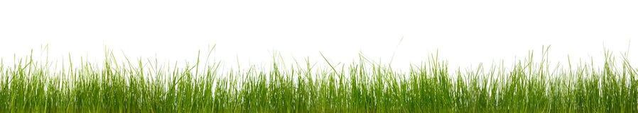 Buitengewoon breed horizontaal gras royalty-vrije stock afbeeldingen