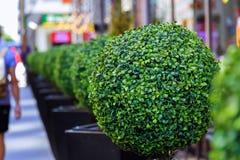 buitenkant van het hotel en het restaurant, met bloeiende kleine bomen Royalty-vrije Stock Fotografie