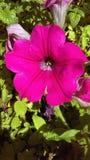 Buitensporige bloem Royalty-vrije Stock Foto's