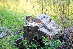 Buitensporige kat gevangen de zomerschaduw royalty-vrije stock fotografie
