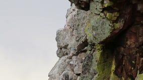 Buitre de Griffon de alimentación sobre Salto del Gitano, España almacen de video