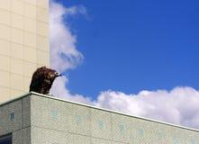 Buitre en un tejado Imagen de archivo