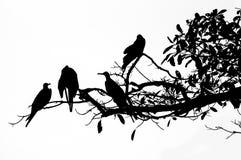Buitres en un árbol Imagen de archivo libre de regalías