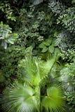 Bujny dżungli zielony tło fotografia stock